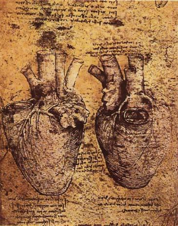 leonardo_da_vinci_heart_and_its_blood_vessels