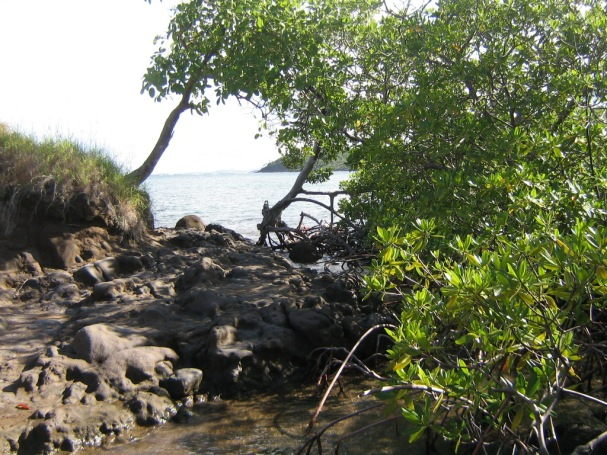 Mangrove-Dubuc