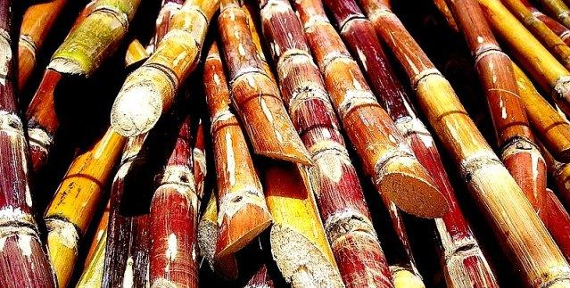 800px-Cut_sugarcane