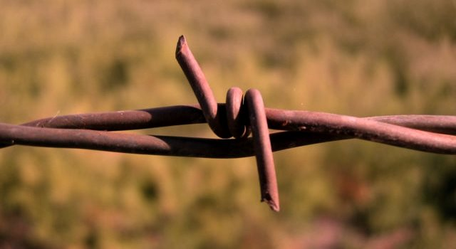 Barbed_Wire_Closeup