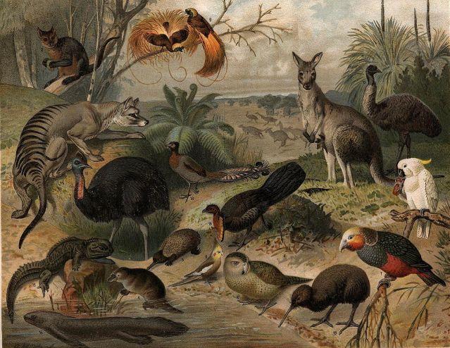 1280px-Australisk_fauna,_Nordisk_familjebok.jpg