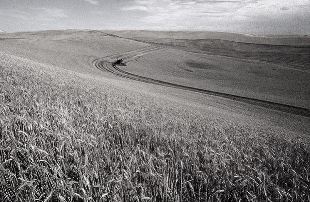 Wheat_harvest.jpg