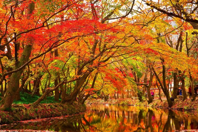 1920px-Maple_Trees_by_Creek.jpg