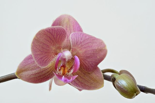 Orchid_high_resolution (1).jpg